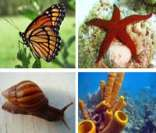 Invertebrados: grande diversidade no Reino Animal