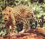 animais da floresta amazônica fauna