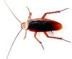 Fotos de insetos imagens for Figuras de jardin baratas