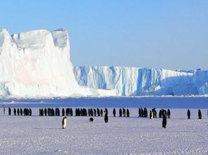 Foto de pinguins imperador na Antártida